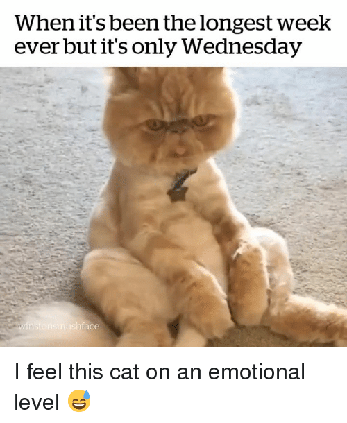 Wednesday, Been, and Cat: When it's been the longest week  ever but it's only Wednesday  ace I feel this cat on an emotional level 😅