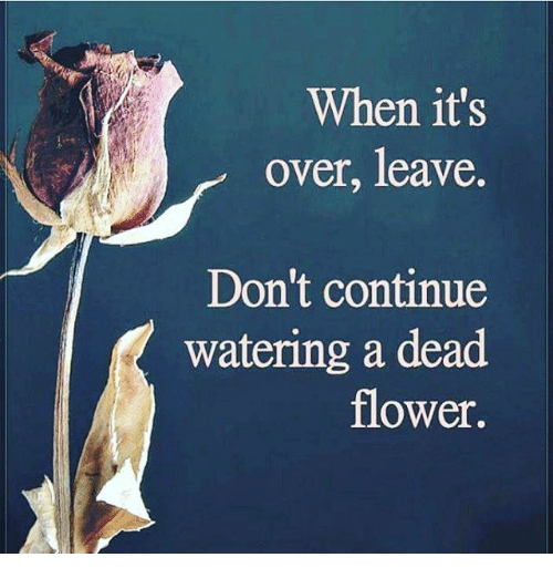 when-its-over-leave-dont-continue-watering-a-dead-flower-19007487.png