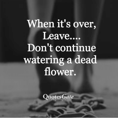 Its Over Quotes When It's Over Leave Don't Continue Watering a Dead Flower Quotes  Its Over Quotes
