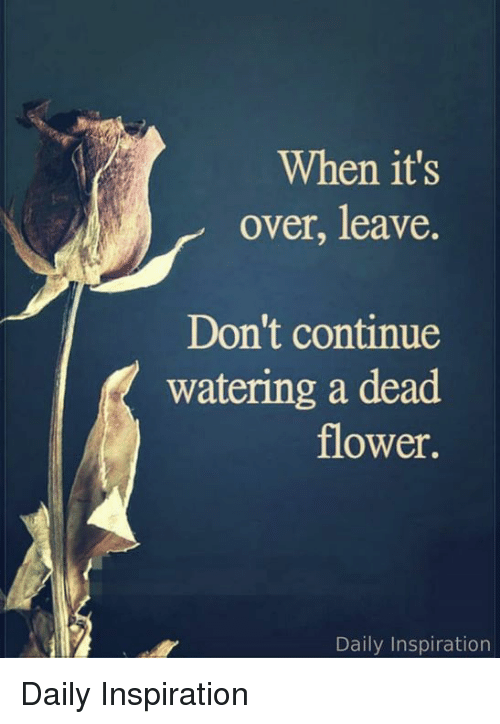 Memes, Flower, and Inspiration: When it's  over, leave.  Don't continue  watering a dead  flower.  Daily Inspiration Daily Inspiration