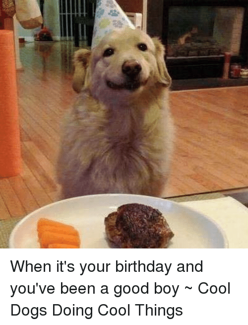 Birthday Dogs And Memes When Its Your Youve Been