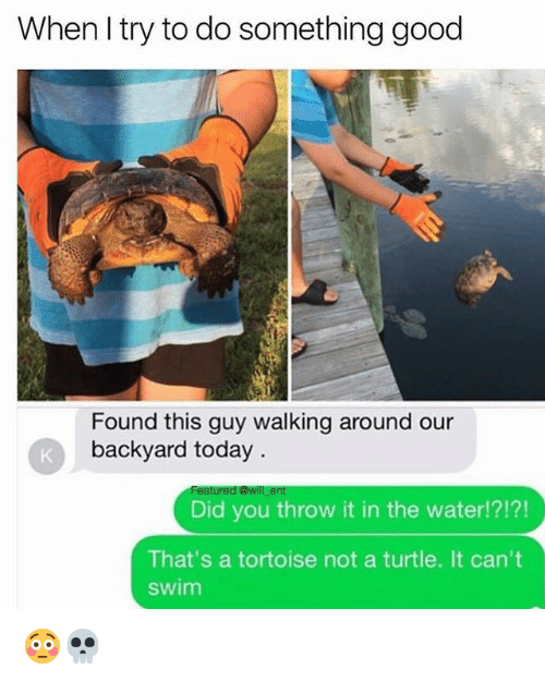 Funny, Good, and Today: When l try to do something good  Found this guy walking around our  backyard today.  Did you throw it in the water!?!?!  That's a tortoise not a turtle. It can't  swim 😳💀