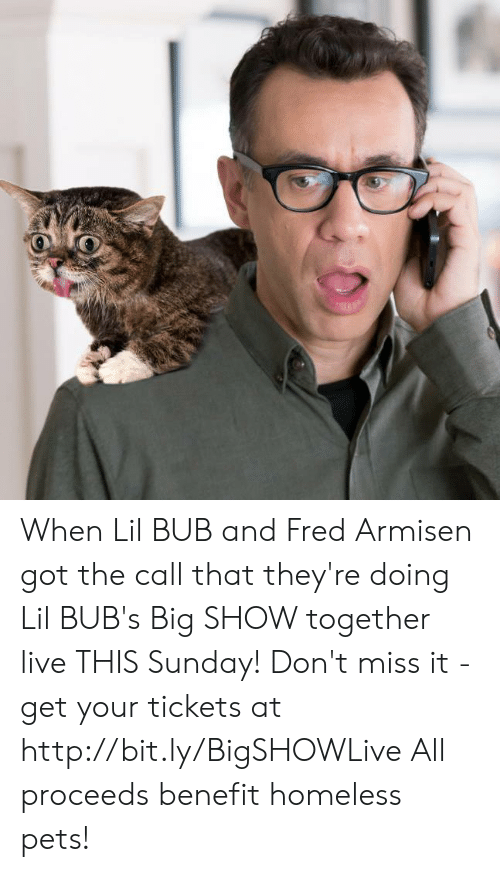 Homeless, Memes, and Big Show: When Lil BUB and Fred Armisen got the call that they're doing Lil BUB's Big SHOW together live THIS Sunday! Don't miss it - get your tickets at http://bit.ly/BigSHOWLive   All proceeds benefit homeless pets!