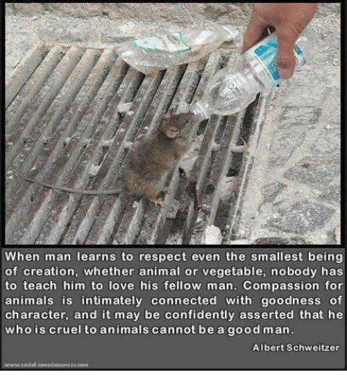 Animals, Love, and Memes: When man learns to respect even the smallest being  of creation, whether animal or vegetable, nobody has  to teach him to love his fellow man. Compassion for  animals is intimately connected with goodness of  character, and it may be confidently asserted that he  whois cruel to animals cannot be a good man  Albert Schweitzer