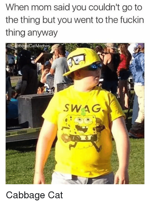 Cats, Moms, and Swag: When mom said you couldn't go to  the thing but you went to the fuckin  thing anyway  Cabbage CatMemes  SWAG  n Cabbage Cat