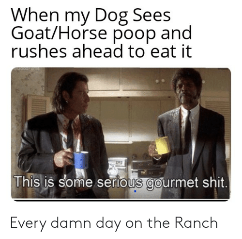 Poop, Shit, and Goat: When my Dog Sees  Goat/Horse poop and  rushes ahead to eat it  This is some serious gourmet shit. Every damn day on the Ranch