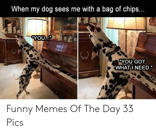 """Funny, Memes, and Got: When my dog sees me with a bag of chips.  YOU.""""  YOU GOT  WHATINEED Funny Memes Of The Day 33 Pics"""