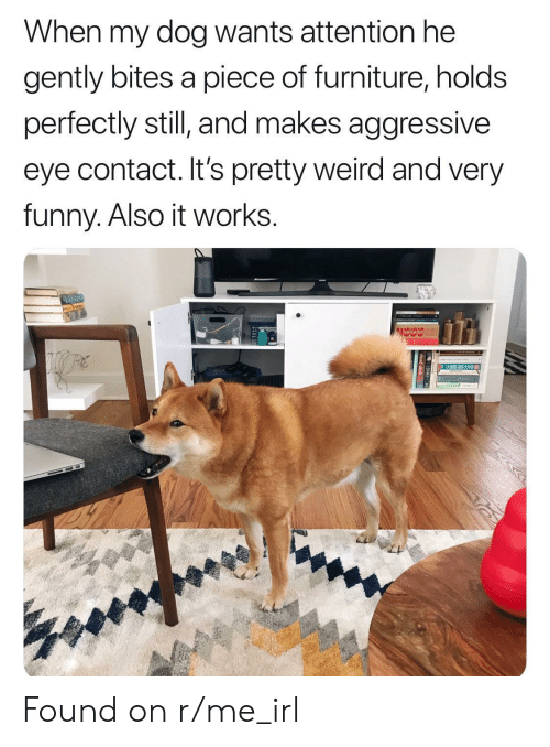 Funny, Weird, and Furniture: When my dog wants attention he  gently bites a piece of furniture, holds  perfectly still and makes aggressive  eye contact. It's pretty weird and very  funny. Also it works. Found on r/me_irl