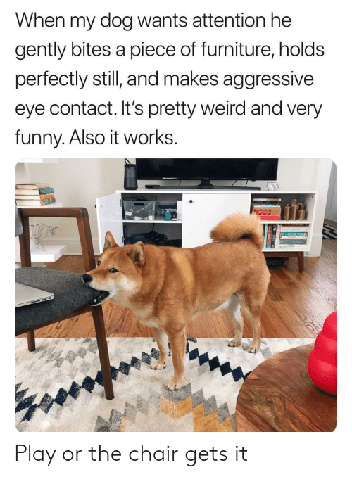 Funny, Weird, and Furniture: When my dog wants attention he  gently bites a piece of furniture, holds  perfectly still and makes aggressive  eye contact. It's pretty weird and very  funny. Also it works. Play or the chair gets it