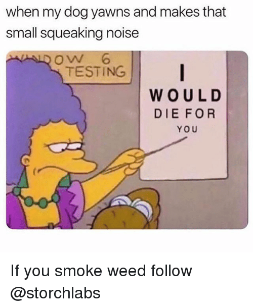 Funny, Weed, and Dog: when my dog yawns and makes that  small squeaking noise  ow 6  TESTING  WOUL D  DIEFOR  YOU If you smoke weed follow @storchlabs