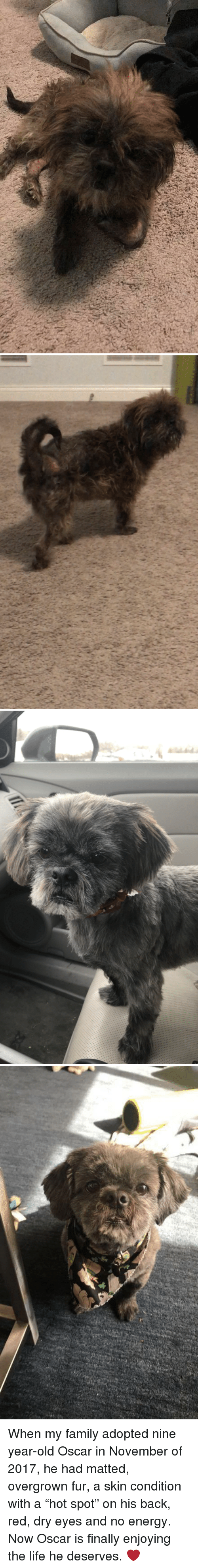 """Energy, Family, and Life: When my family adopted nine year-old Oscar in November of 2017, he had matted, overgrown fur, a skin condition with a """"hot spot"""" on his back, red, dry eyes and no energy. Now Oscar is finally enjoying the life he deserves. ❤️"""