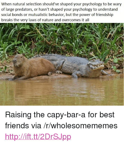 """Friends, Best, and Http: When natural selection should've shaped your psychology to be wary  of large predators, or hasn't shaped your psychology to understand  social bonds or mutualistic behavior, but the power of friendship  breaks the very laws of nature and overcomes it all <p>Raising the capy-bar-a for best friends via /r/wholesomememes <a href=""""http://ift.tt/2DrSJpp"""">http://ift.tt/2DrSJpp</a></p>"""