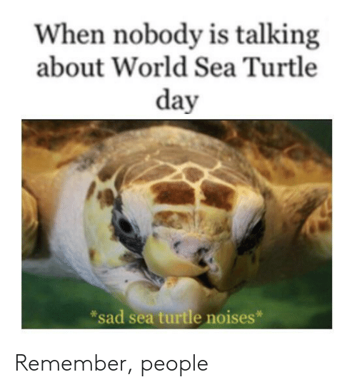 Reddit, Turtle, and World: When nobody is talking  about World Sea Turtle  day  sad sea turtle noises* Remember, people