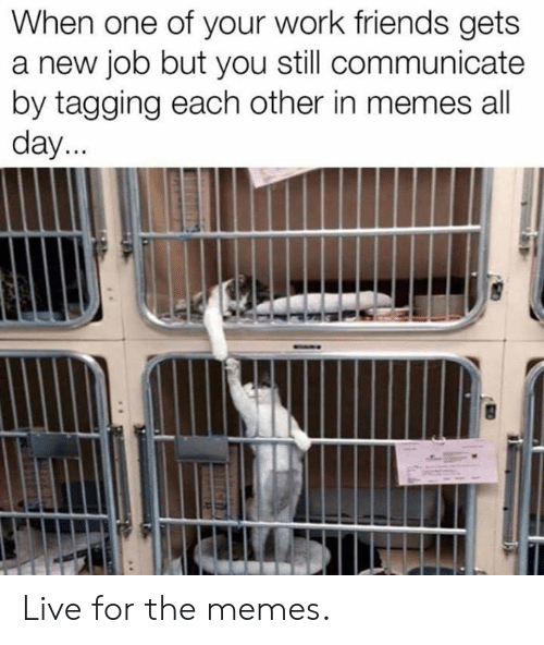 Dank, Friends, and Memes: When one of your work friends gets  a new job but you still communicate  by tagging each other in memes all  day Live for the memes.