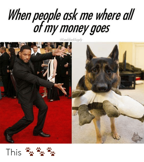 Memes, Money, and 🤖: When people ask me where all  of my money goes  andsharkSupply  LAND  CARK This 🐾🐾🐾