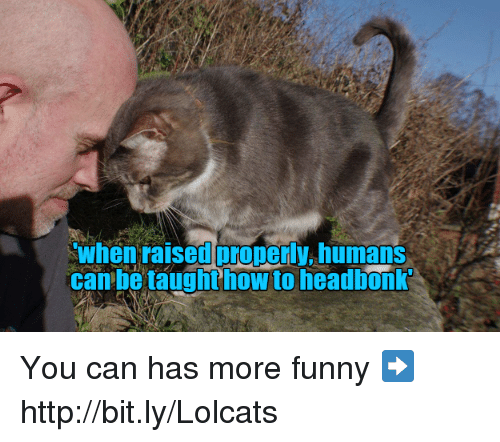 Funny, Memes, and Http: when raised properly humans  can be taughthow to headbonk You can has more funny ➡️ http://bit.ly/Lolcats