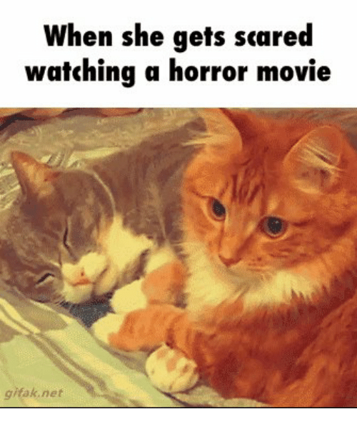 25 best memes about grumpy cat grumpy cat memes movies scare and grumpy cat when she gets scared watching a horror movie k net thecheapjerseys Gallery