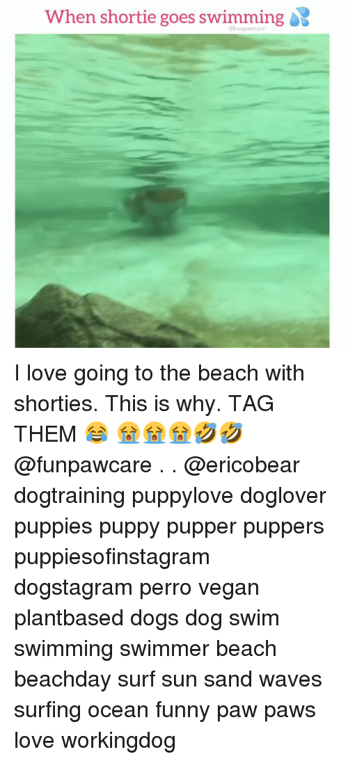 Dogs, Funny, and Love: When shortie goes swimming  @funpawcare I love going to the beach with shorties. This is why. TAG THEM 😂 😭😭😭🤣🤣 @funpawcare . . @ericobear dogtraining puppylove doglover puppies puppy pupper puppers puppiesofinstagram dogstagram perro vegan plantbased dogs dog swim swimming swimmer beach beachday surf sun sand waves surfing ocean funny paw paws love workingdog