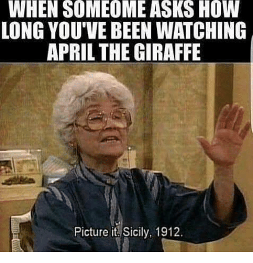 Memes, Giraffe, and April: WHEN  SOMEOME  ASKS  HOW  LONG YOU'VE BEEN WATCHING  APRIL THE GIRAFFE  Picture it Sicily, 1912