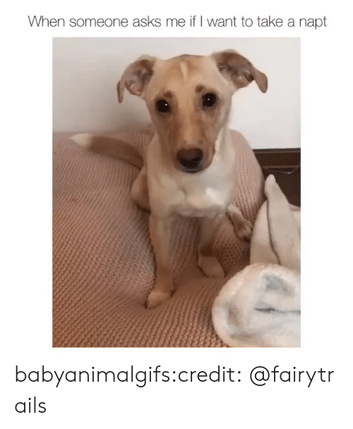 Instagram, Target, and Tumblr: When someone asks me if I want to take a napt babyanimalgifs:credit:@fairytrails