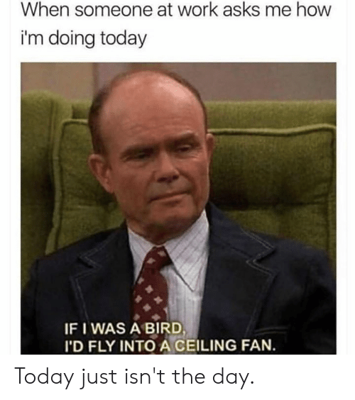 Dank, Work, and Today: When someone at work asks me how  i'm doing today  IF I WAS A BIRD  'D FLY INTO A CEILING FAN. Today just isn't the day.