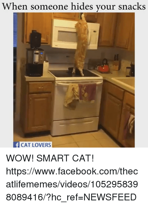 Memes, 🤖, and Smart: When someone hides your snacks  CAT LOVERS WOW! SMART CAT! https://www.facebook.com/thecatlifememes/videos/1052958398089416/?hc_ref=NEWSFEED