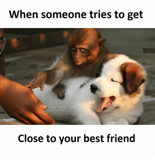 Best Friend, Friends, and Best: When someone tries to get  Close to your best friend