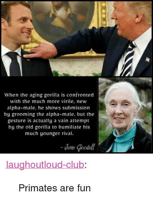 "Club, Tumblr, and Blog: When the aging gorilla is confronted  with the much more virile, new  alpha-male, he shows submission  by grooming the alpha-male, but the  gesture is actually a vain attempt  by the old gorilla to humiliate his  much younger rival <p><a href=""http://laughoutloud-club.tumblr.com/post/173410653844/primates-are-fun"" class=""tumblr_blog"">laughoutloud-club</a>:</p>  <blockquote><p>Primates are fun</p></blockquote>"