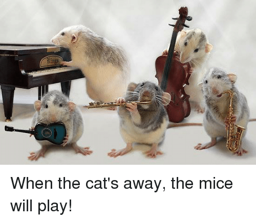Cats, Memes, and 🤖: When the cat's away, the mice will play!