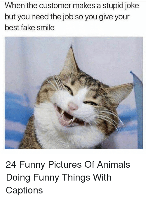 Animals, Fake, and Funny: When the customer makes a stupid joke  but you need the job so you give your  best fake smile 24 Funny Pictures Of Animals Doing Funny Things With Captions