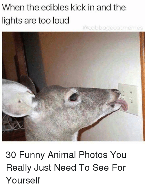 Funny, Animal, and Photos: When the edibles kick in and the  lights are too loud  cicbbagecatmemes 30 Funny Animal Photos You Really Just Need To See For Yourself