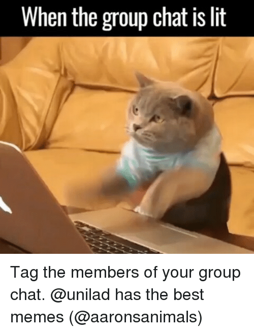 Funny, Group Chat, and Lit: When the group chat is lit Tag the members of your group chat. @unilad has the best memes (@aaronsanimals)