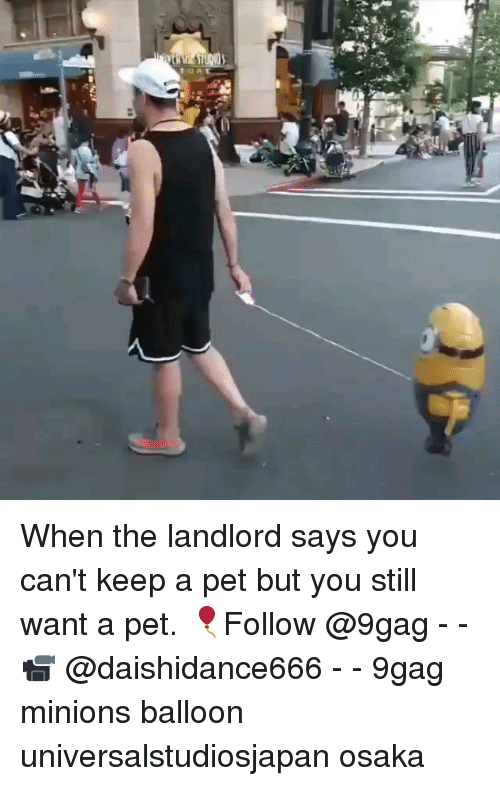 9gag, Memes, and Minions: When the landlord says you can't keep a pet but you still want a pet. 🎈Follow @9gag - - 📹 @daishidance666 - - 9gag minions balloon universalstudiosjapan osaka