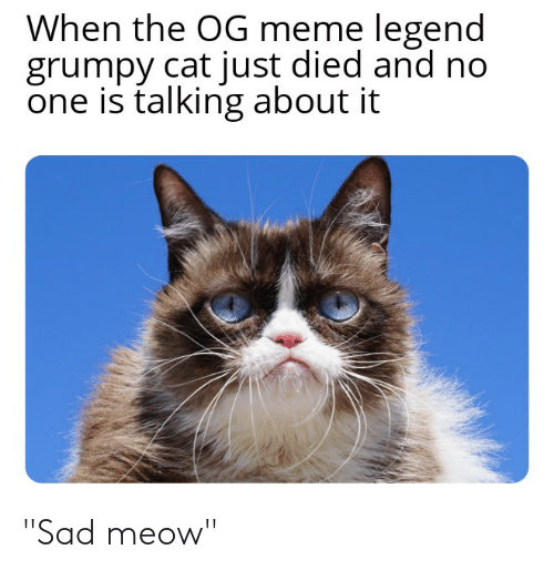 When the OG Meme Legend Grumpy Cat Just Died and No One Is Talking