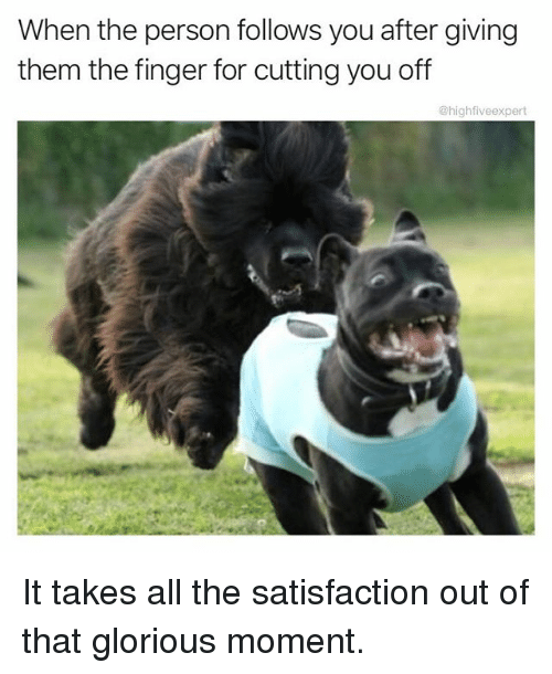 Memes, Glorious, and All The: When the person follows you after giving  them the finger for cutting you off  @highfiveexpert It takes all the satisfaction out of that glorious moment.