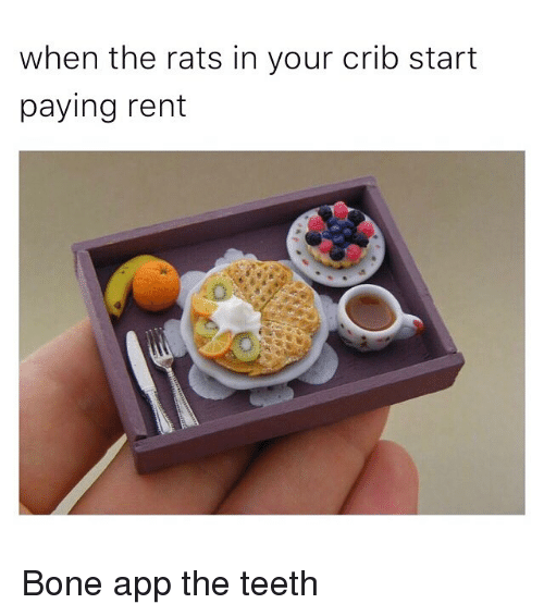 Funny, Memes, and Rent: when the rats in your crib start  paying rent Bone app the teeth