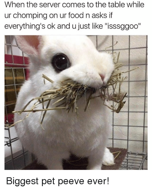 """Dank, Food, and Pets: When the server comes to the table while  ur chomping on ur food n asks if  everything's ok and u just like """"isssggoo"""" Biggest pet peeve ever!"""