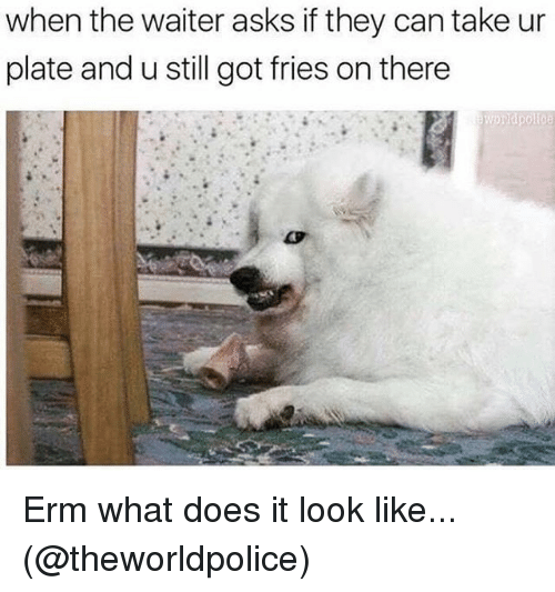 Memes, What Does, and Asks: when the waiter asks if they can take ur  plate and u still got fries on there Erm what does it look like... (@theworldpolice)
