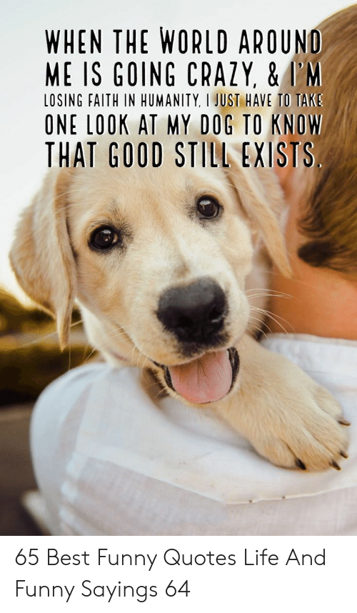 Crazy, Funny, and Life: WHEN THE WORLD AROUND  ME IS GOING CRAZY, &I'M  LOSING FAITH IN HUMANITY, I JUST HAVE TO TAKS  ONE LOOK AT MY DOG TO KNOW  THAT GOOD STILL EXISTS 65 Best Funny Quotes Life And Funny Sayings 64