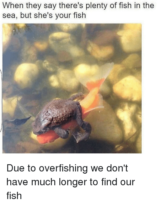25 best memes about fishes in the sea fishes in the sea for Plenty of fish meet me