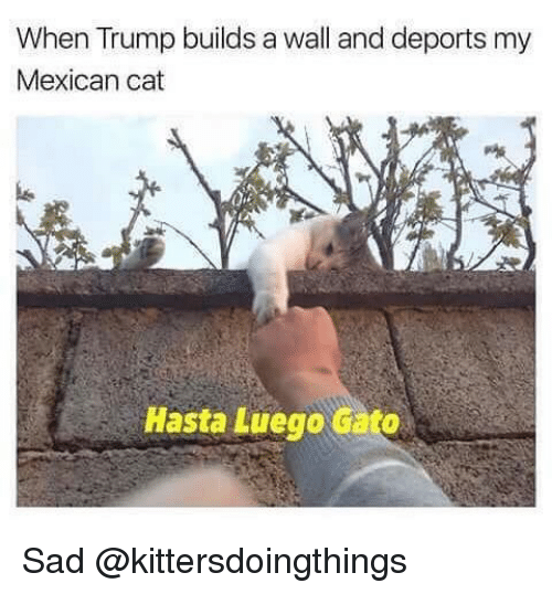 25+ Best Memes About Trump Builds A Wall