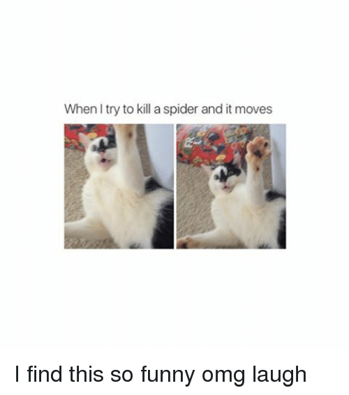 Funny, Omg, and Spider: When try to kill a spider and it moves I find this so funny omg laugh