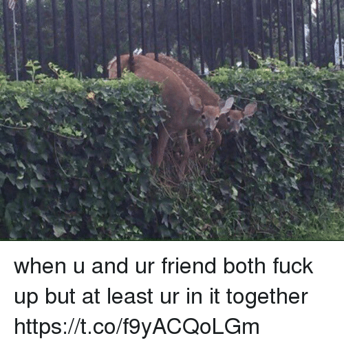 Funny, Awkward, and Fuck: when u and ur friend both fuck up but at least ur in it together https://t.co/f9yACQoLGm