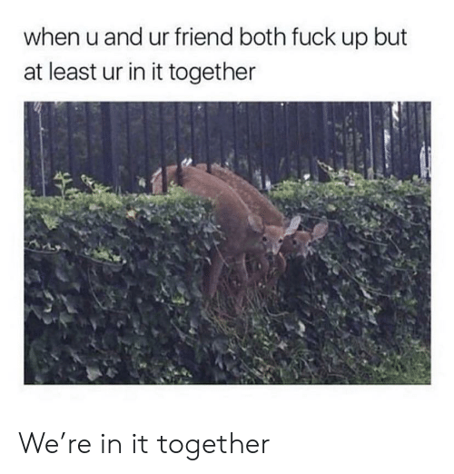 Fuck, Friend, and When U: when u and ur friend both fuck up but  at least ur in it together We're in it together