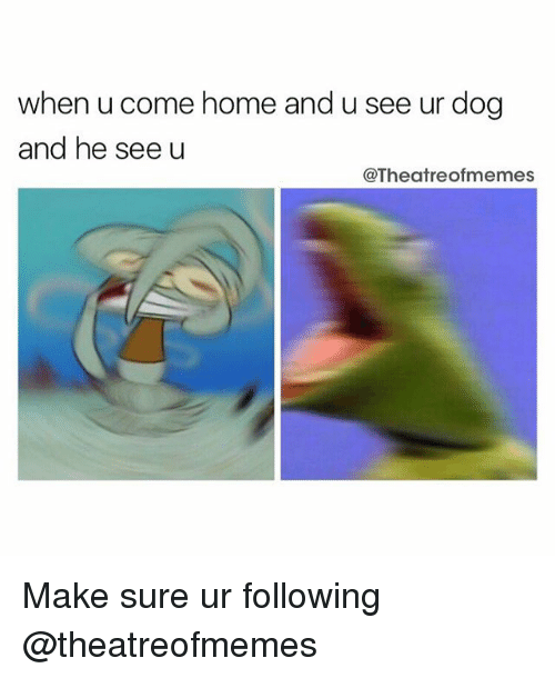 Dogs, Memes, and Home: when u come home and u see ur dog  and he see u  @Theatre ofmemes Make sure ur following @theatreofmemes