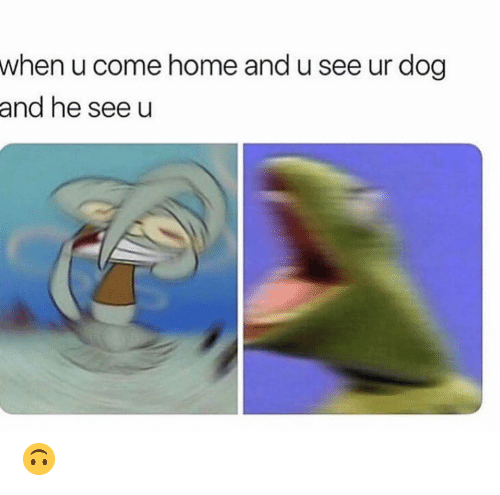 Funny, Home, and Dog: when u come home and u see ur dog  and he see u 🙃