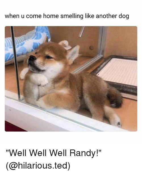 "Funny, Ted, and Home: when u come home smelling like another dog ""Well Well Well Randy!"" (@hilarious.ted)"