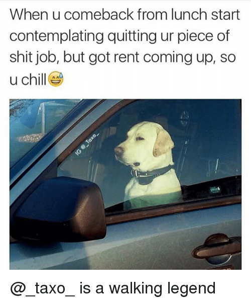 Chill, Shit, and Dank Memes: When u comeback from lunch start  contemplating quitting ur piece of  shit job, but got rent coming up, so  u chill @_taxo_ is a walking legend