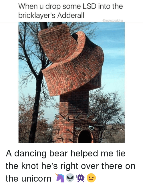 Dancing, Funny, and Bear: When u drop some LSD into the  bricklayer's Adderall  (a moistbuddha A dancing bear helped me tie the knot he's right over there on the unicorn 🦄👽👾😐