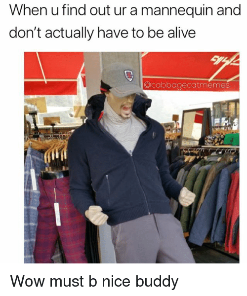 Alive, Wow, and Dank Memes: When u find out ur a mannequin and  don't actually have to be alive  acabbagecatmemes Wow must b nice buddy